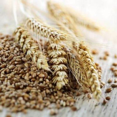 grains whole grains eating grains